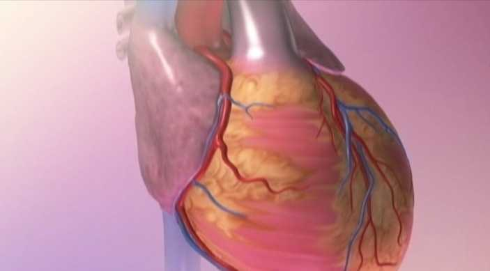 4. Interval training raises HDL cholesterol