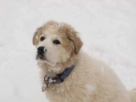 This guy in particular is not amused by snow.