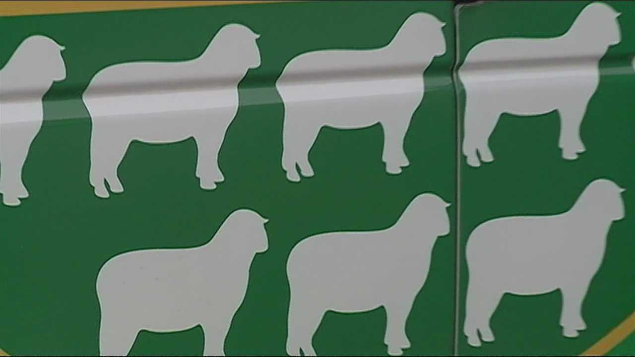 2013 a big year for Bernalillo Co. Animal Services
