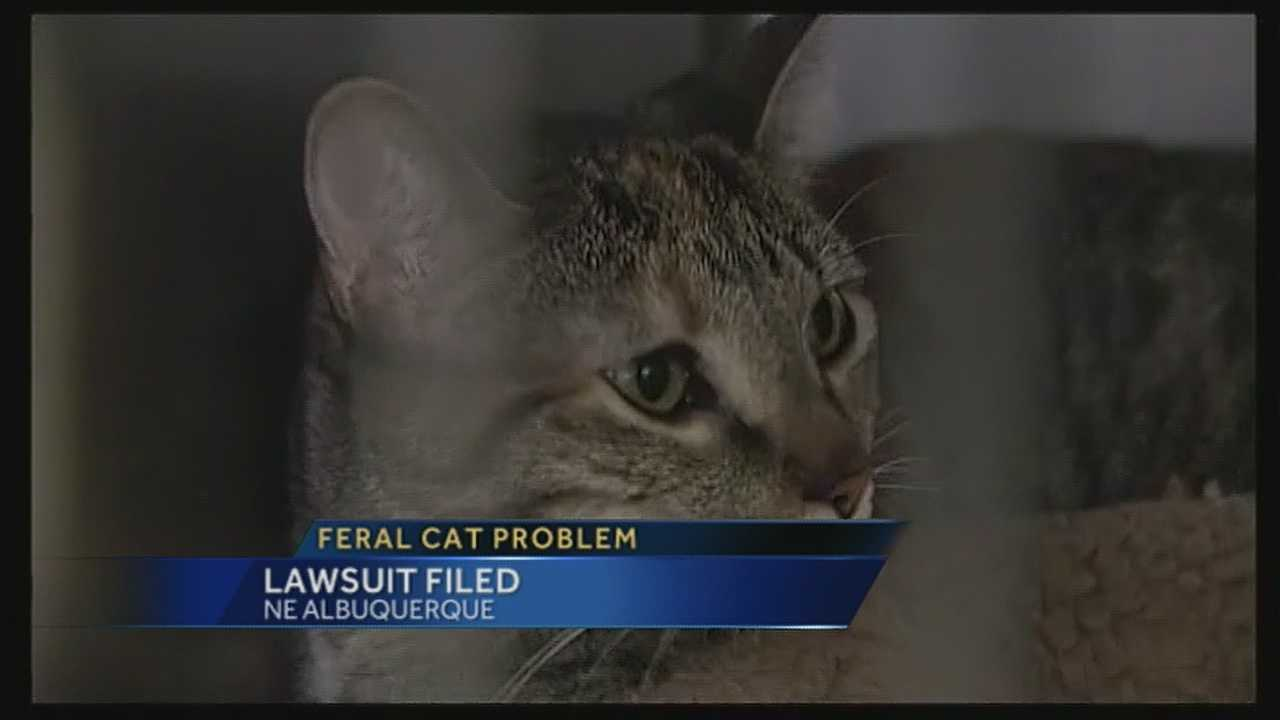 Thousands of Albuquerque feral cats are at the center of a recently filed lawsuit.