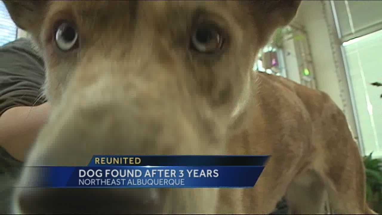 Family reunites with dog after three years
