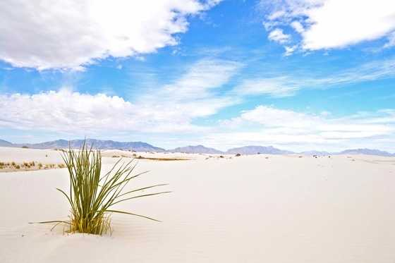 A White Sands DreamTaken in White Sands as part of New Mexico True.