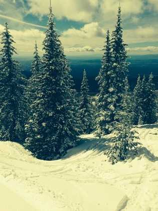 Snow covered treesView from Santa Fe ski area.