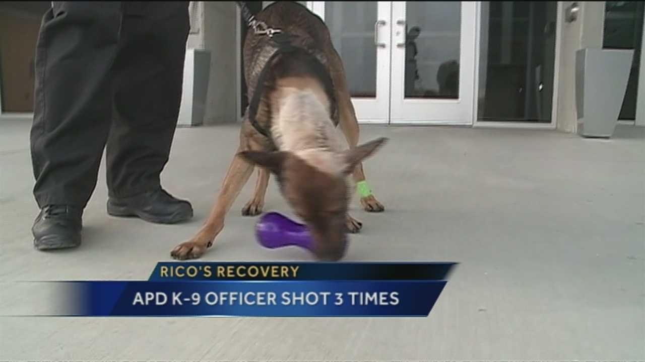 The Albuquerque police K-9 officer seriously injured in a shooting is on the mend.
