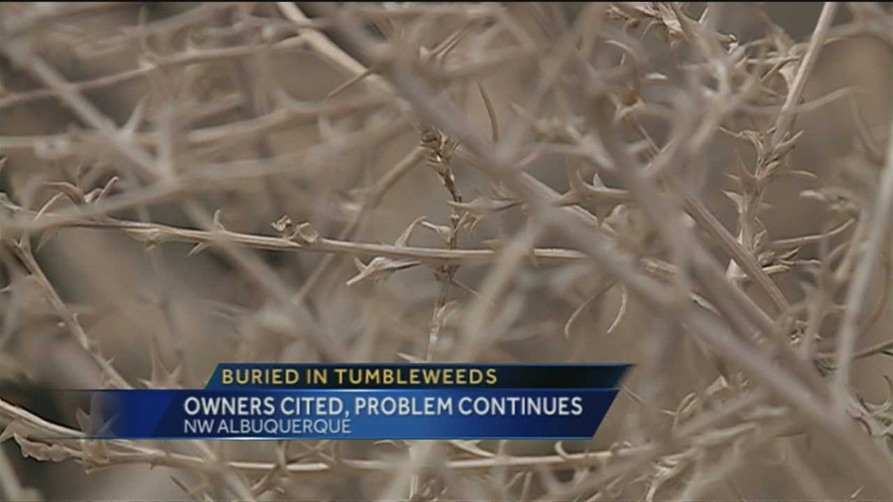 BURIED IN TUMBLEWEEDS.      A NORTHWEST ALBUQUERQUE COMMUNITY IS SAYING ENOUGH IS ENOUGH.