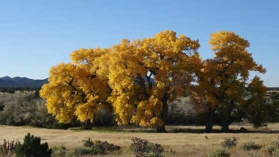 Algodones (NM 313): Pueblo de Santa Ana