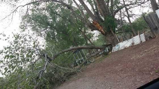 Branch (Albuquerque)