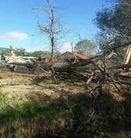 Tree (North Los Lentes)