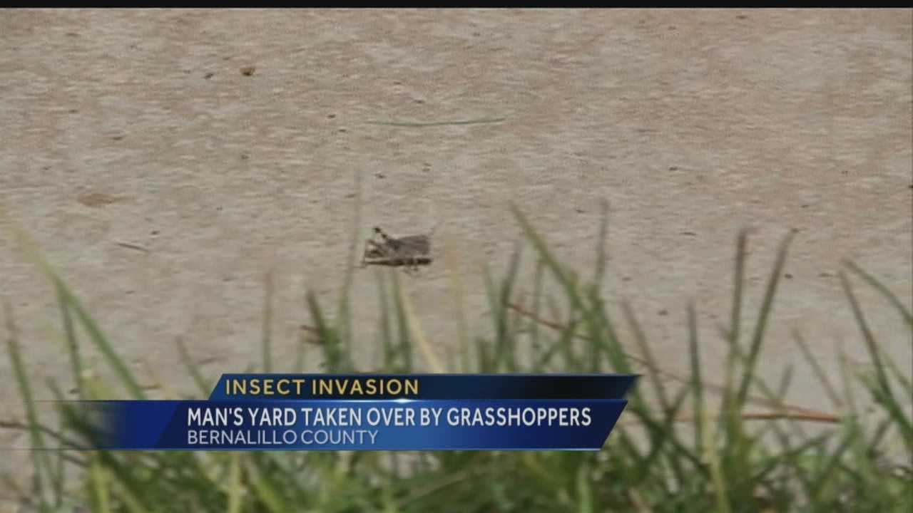 Man's yard taken over by grasshoppers