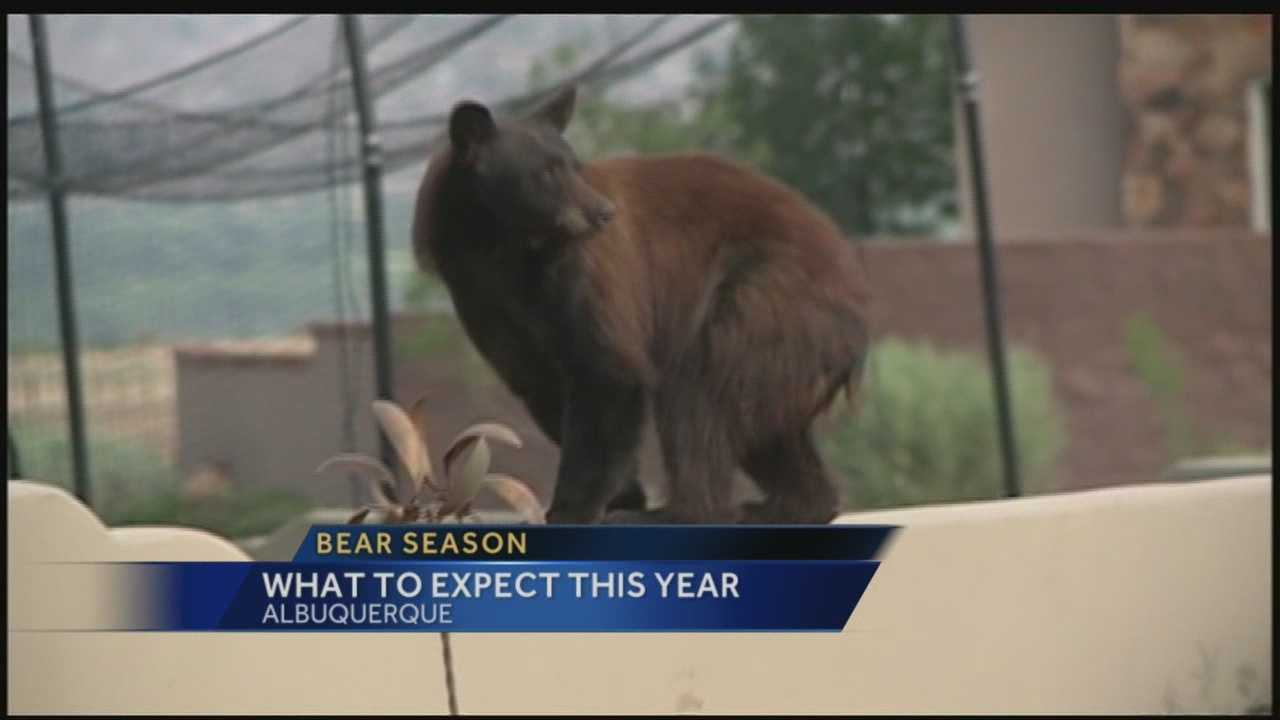 A lack of rain will likely lead to a big fire season in 2014 as well as a surge of hungry bears making their way into the metropolitan area.