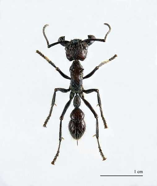 Bullet ant. Sting more painful than a Tarantula hawk, and is considered the most painful in the insect world. Not fatal. No permanent damage.