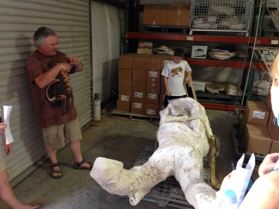 Friday, the Mastodon fossil arrived at the New Mexico History and Science Museum.