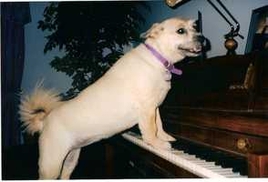 58. Take piano lessons at the Sawmill School of Music in Albuquerque
