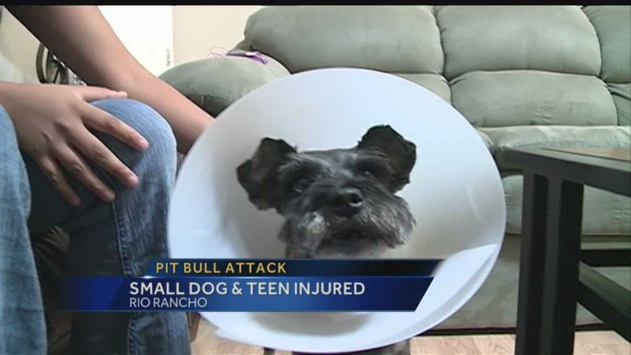An area family said two pit bulls tore up their dog, and when their teen daughter tried to save it, the dog got her too.