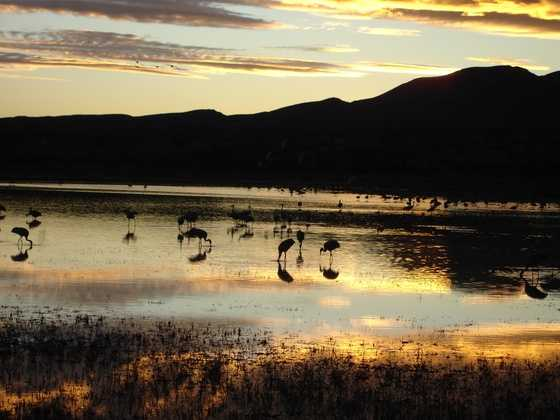 The Bosque del Apache National Wildlife Refuge is about 200 miles and three hours round-trip. We're right at the limit of our $40 gas category. Many enjoy the Festival of Cranes. It's $5 per vehicle to get in.