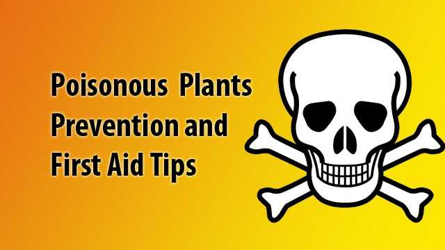 With summer in full swing make sure you know how to deal with effects of poisonous plants and how to prevent dangerous encounters from the NM Poison Center.