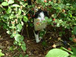 Realize that wild plants and berries can be unsafe for human consumption even if animals eat them