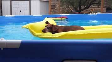 Hard to tell if a kiddie pool based on the size of this dog, Buddy, but we threw it in anyways. Happy dog days of summer, world.