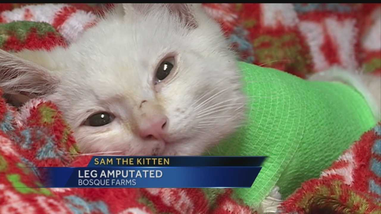 Someone threw an 8-week-old cat out of a truck and into a wall earlier this week. That cat, Sam, had a leg amputated Friday.