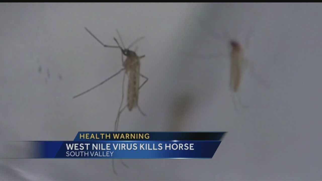 With all the heavy rains, city officials have been on the look out for mosquitoes carrying West Nile virus. Today, the first case was confirmed in a horse.
