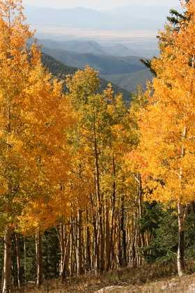 Go on a hike to check out the beautiful fall foliage, snap a photo and uploaded it to u local. Your photo may be used on TV.