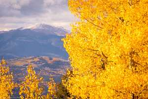 Itching to go on a road trip? It's the perfect time of year to check out fall foliage -- here are the best places to do so, from New Mexico Tourism.