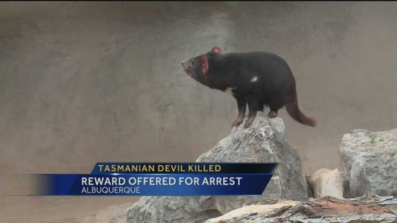 Police continue to investigate the violent killing of a Tasmanian devil at the BioPark.
