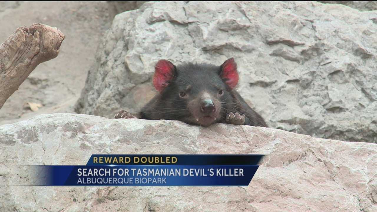 If you know who killed Jasper the Tasmanian Devil at the BioPark, then you could receive some serious cash.