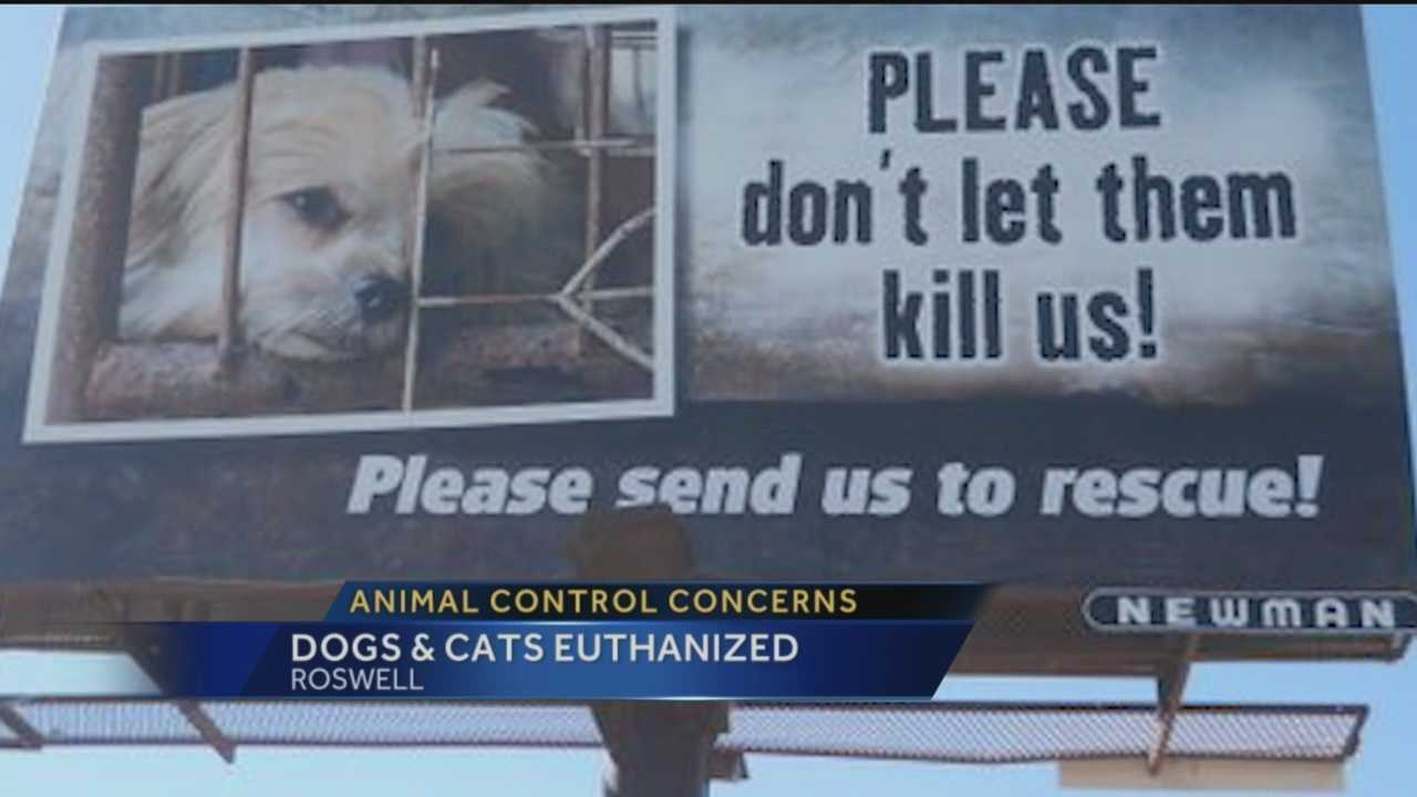 Animal rescue groups and taxpayers in Southern New Mexico are outraged over Roswell's animal welfare department. They say the city is killing an unprecedented amount of dogs and cats, even healthy ones.
