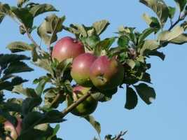 One of the easiest things you can eat to help detoxify your liver is fruits like apples.
