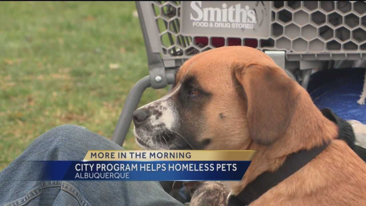 City Program Helps Homeless Pets