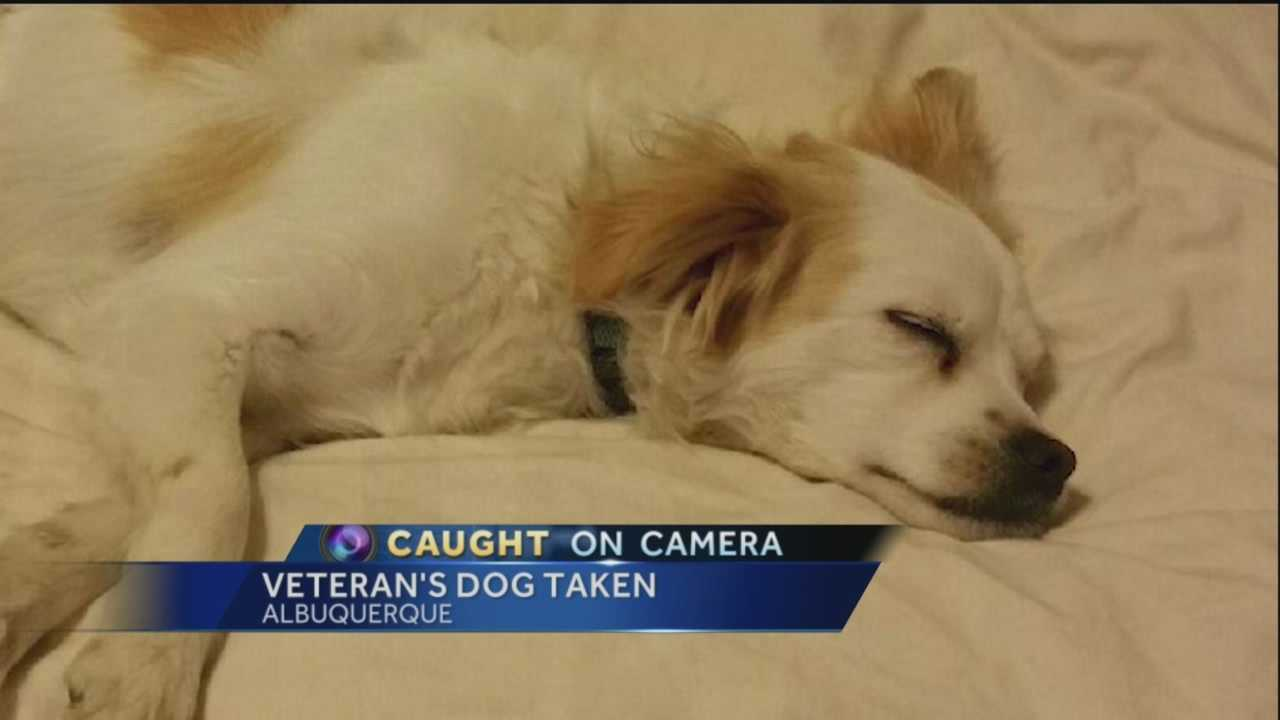 He made our lives better.  That's how a disabled veteran is describing his dog, who was stolen last week.