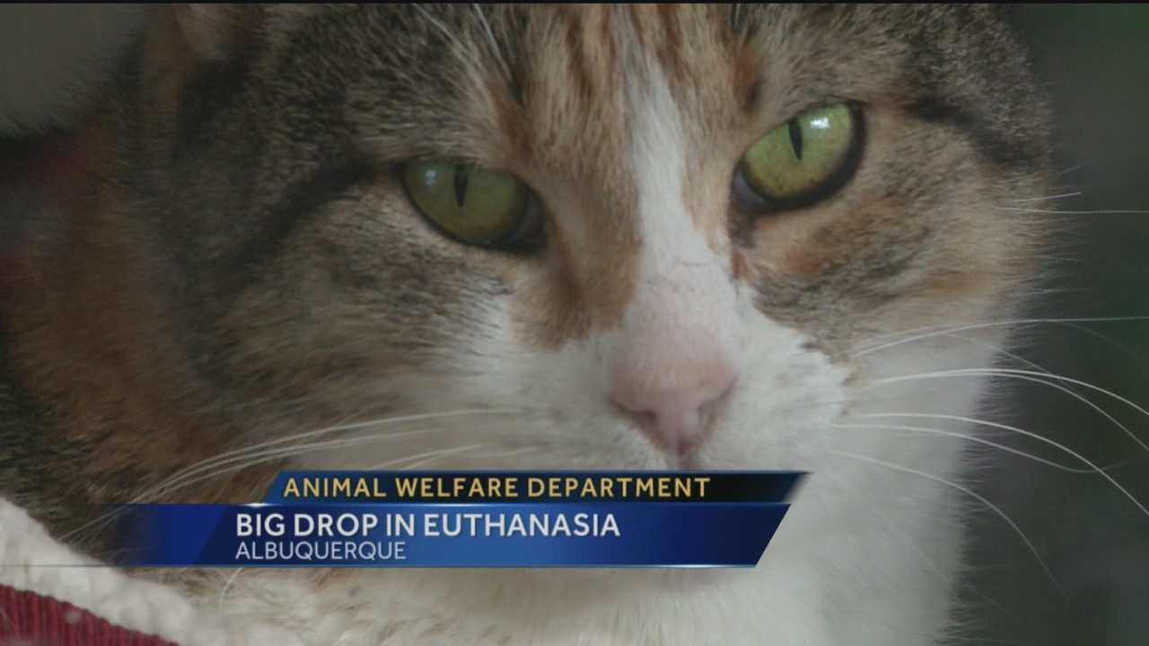 For years, Albuquerque's Animal Welfare Department has had a high rate of euthanasia.