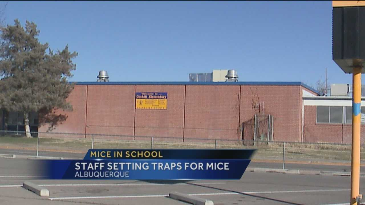 Albuquerque Public Schools confirms mice were recently found at Cochiti Elementary.