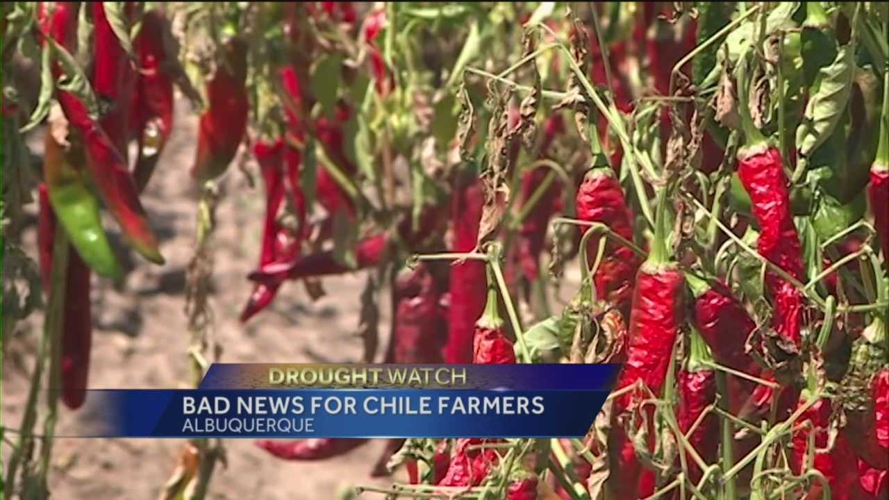 The drought could affect New Mexico's chile crop and prices, and the state's worse off than first thought.
