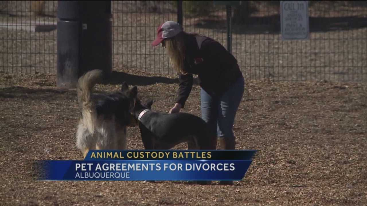 Local lawyers are finding themselves in the big business of pet custody when relationships go sour.