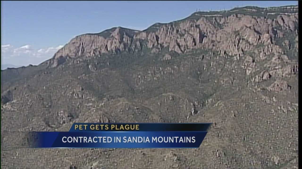 A new concern for pet owners tonight after someone's dog contracted the plague while they were hiking in the Sandias.