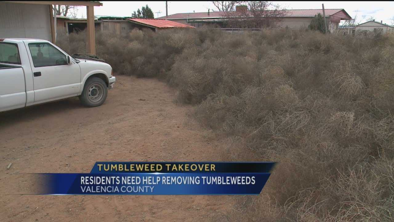 Gusty winds blew hundreds of tumbleweeds from the fields in eastern Valencia County into people's yards last weekend, stacking the weeds as high as people's rooftops in some areas.