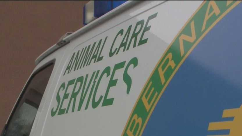 Bernalillo County wants a new tool for its animal services program.