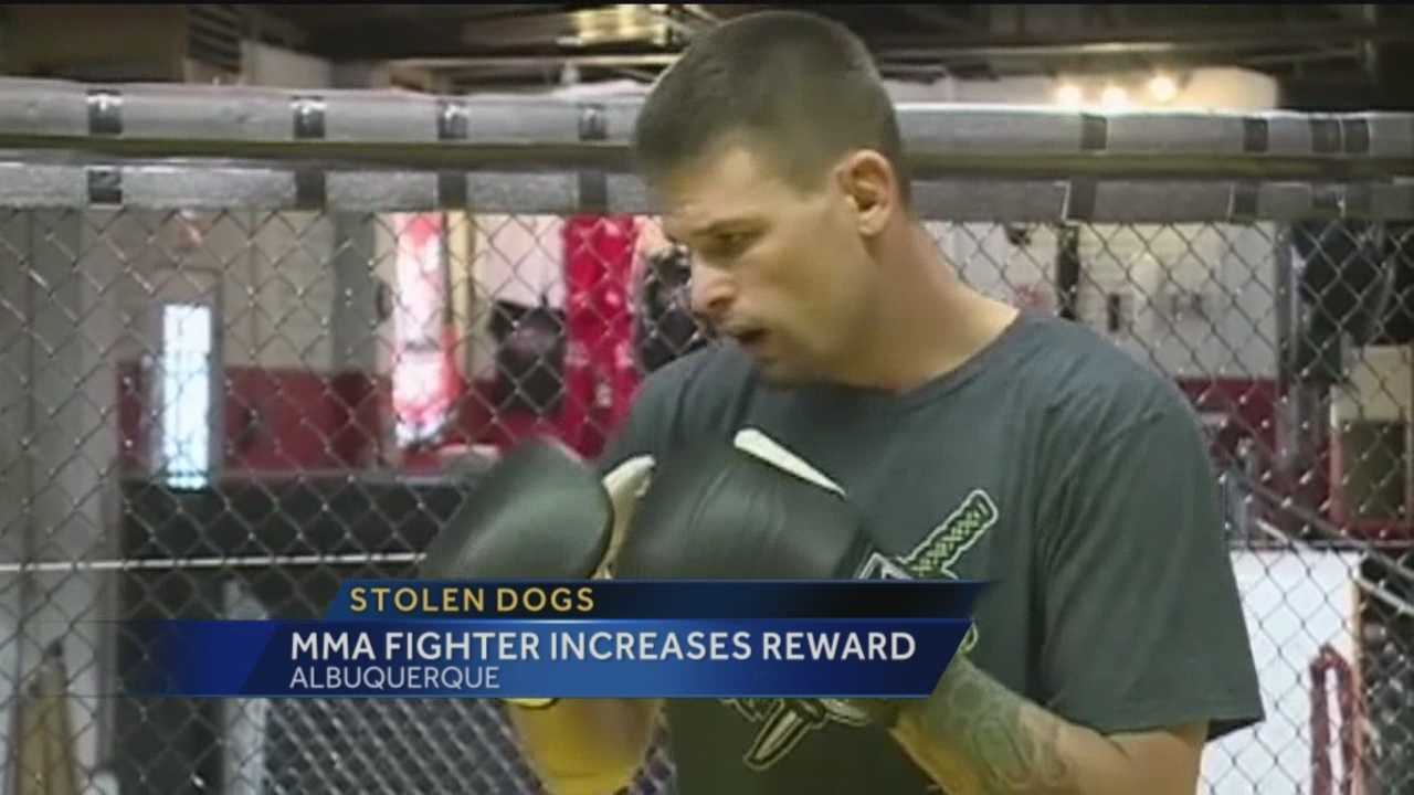 MMA Fighter Increases Stolen Dog Award