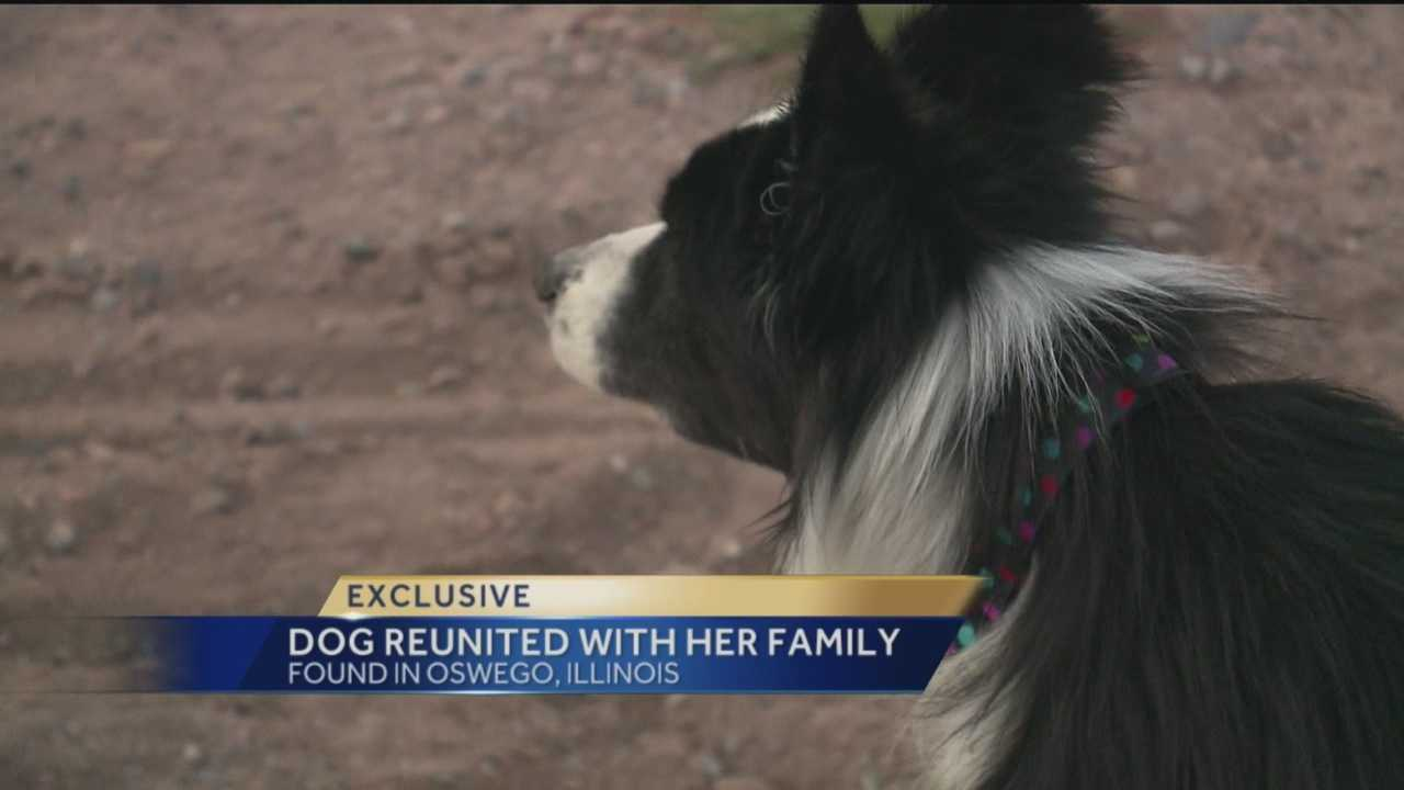 One New Mexico dog pulled off a truly incredible journey.