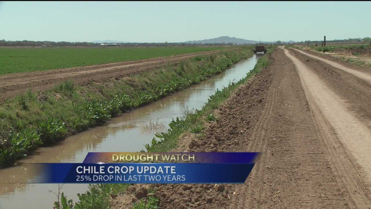 New Mexico's green chile is world famous, but farmers are facing challenges. New numbers show a 25 percent drop in the chile crop in the last two years.