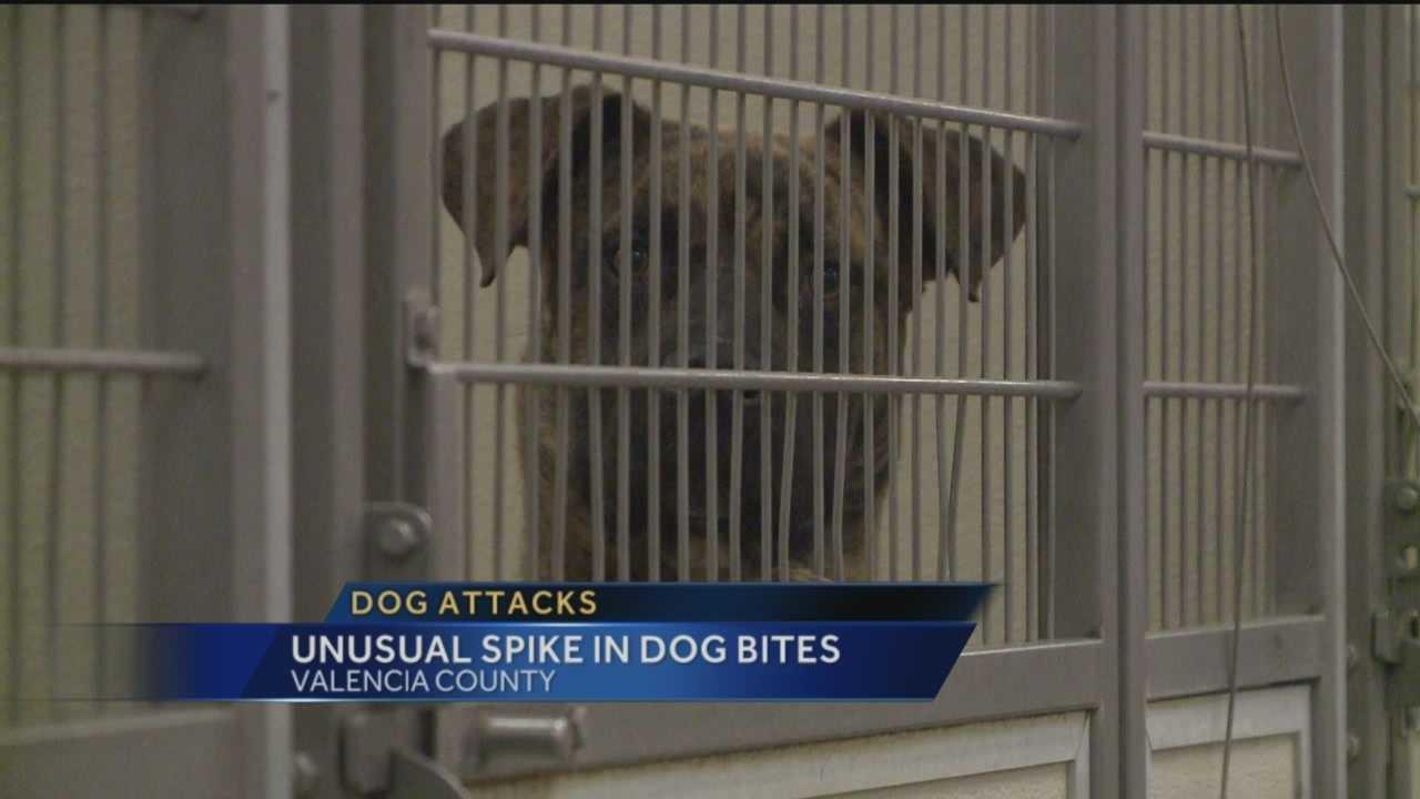 Unusual Spike In Dog Bites