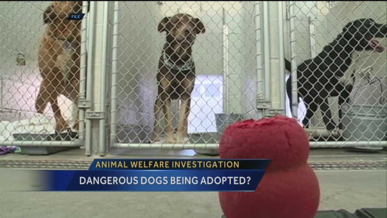 Dangerous dogs that kill other pets or hurt people are usually put down, but a high-ranking Albuquerque shelter employee said some of those dogs are ending up in people's homes, and she's stepping down.
