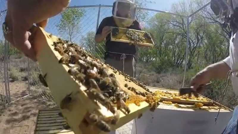 Get a glimpse of life as a beekeeper at the Hyatt Regency Tamaya Resort & Spa.
