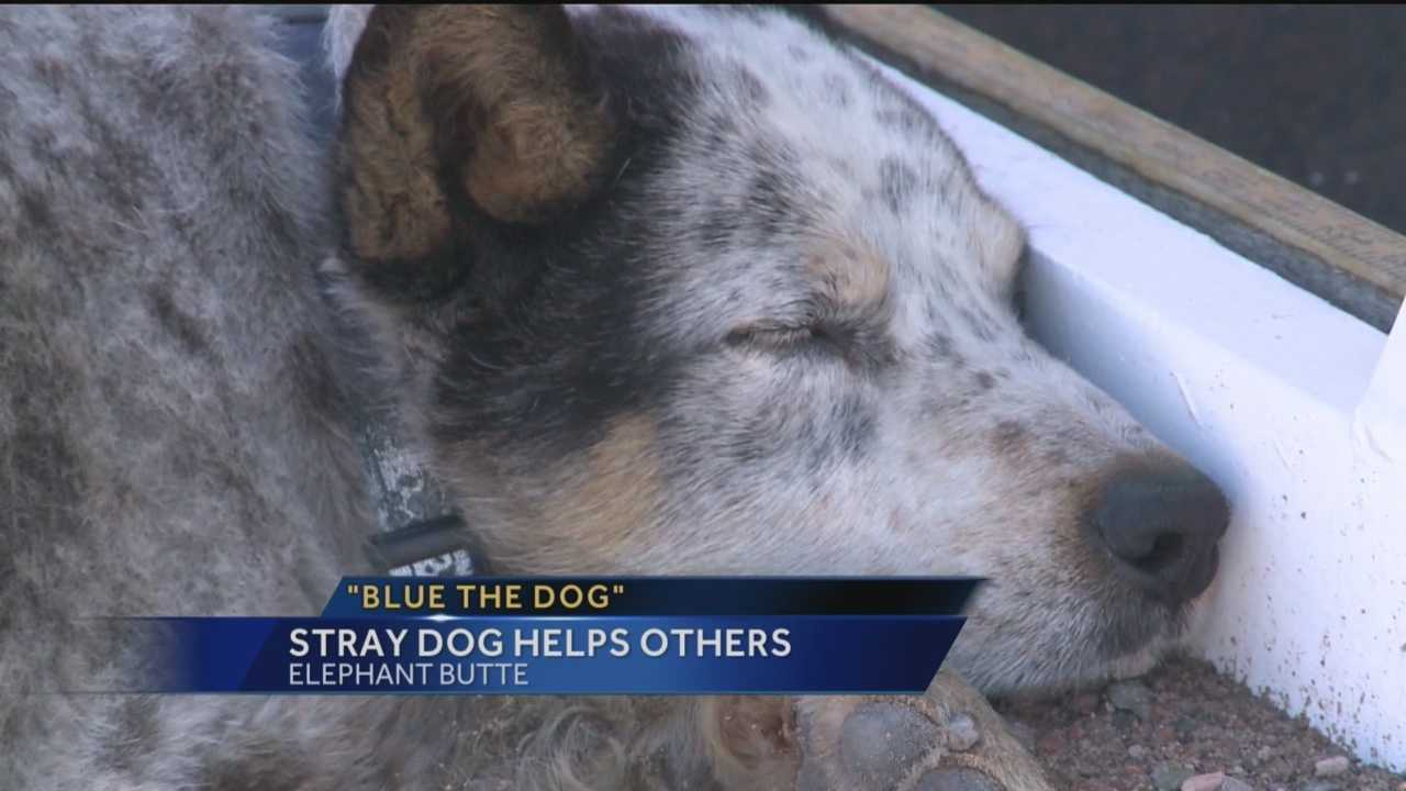 A stray dog in Elephant Butte is helping other dogs in his situation.