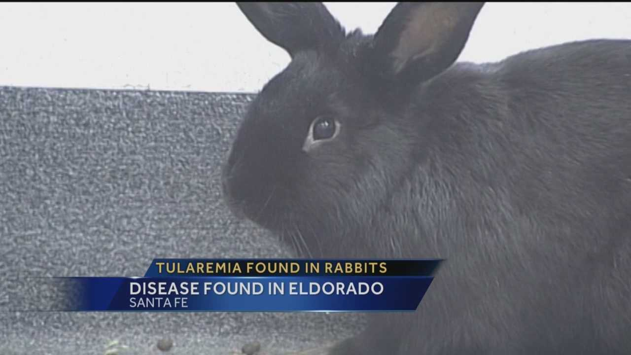 The Santa Fe County sheriff wants to alert people about a dangerous disease found in the area this week -- two rabbits near Eldorado have tested positive for tularemia.
