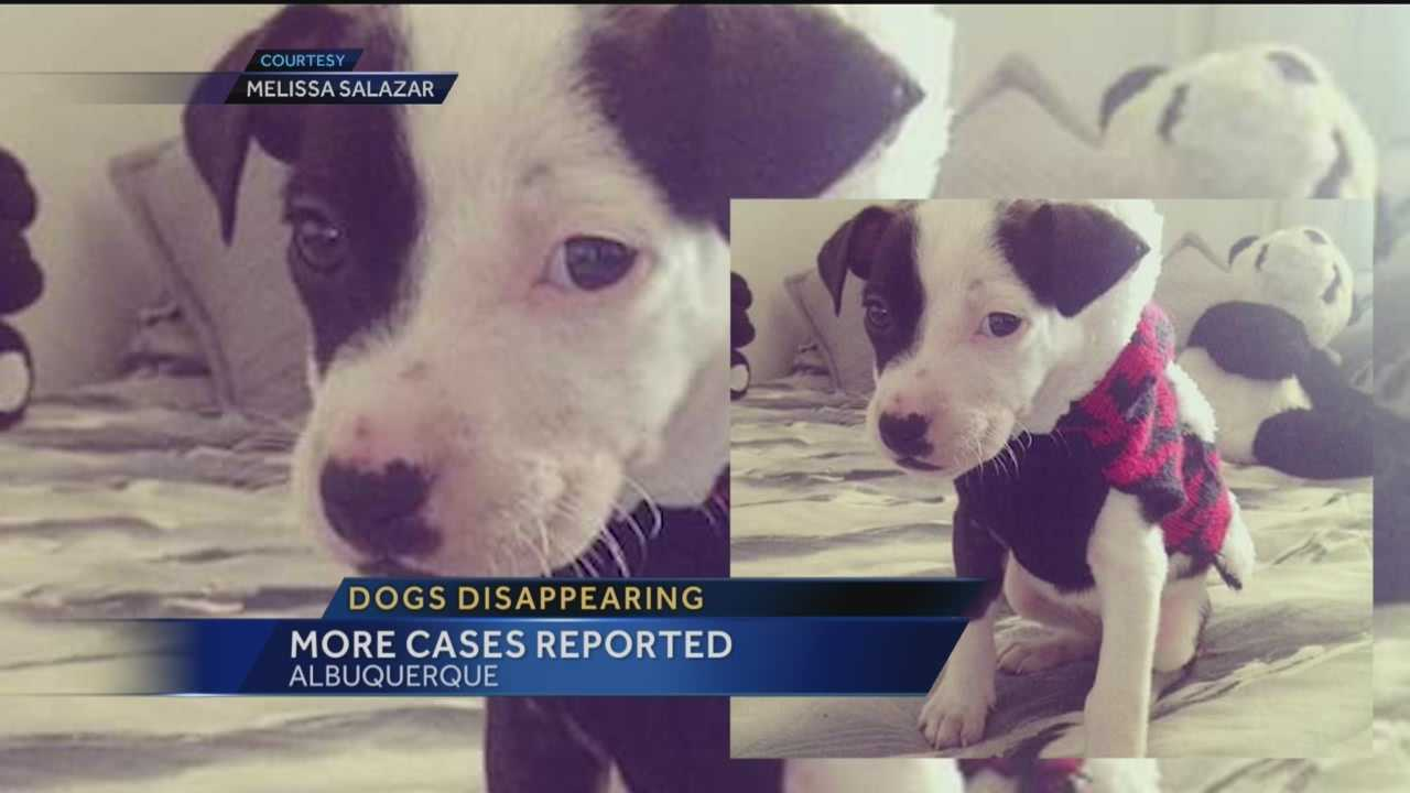 Despite Mayor Richard Berry's warning to dog owners and rewards offered to stop it, two women say dogs are still disappearing from Albuquerque yards.