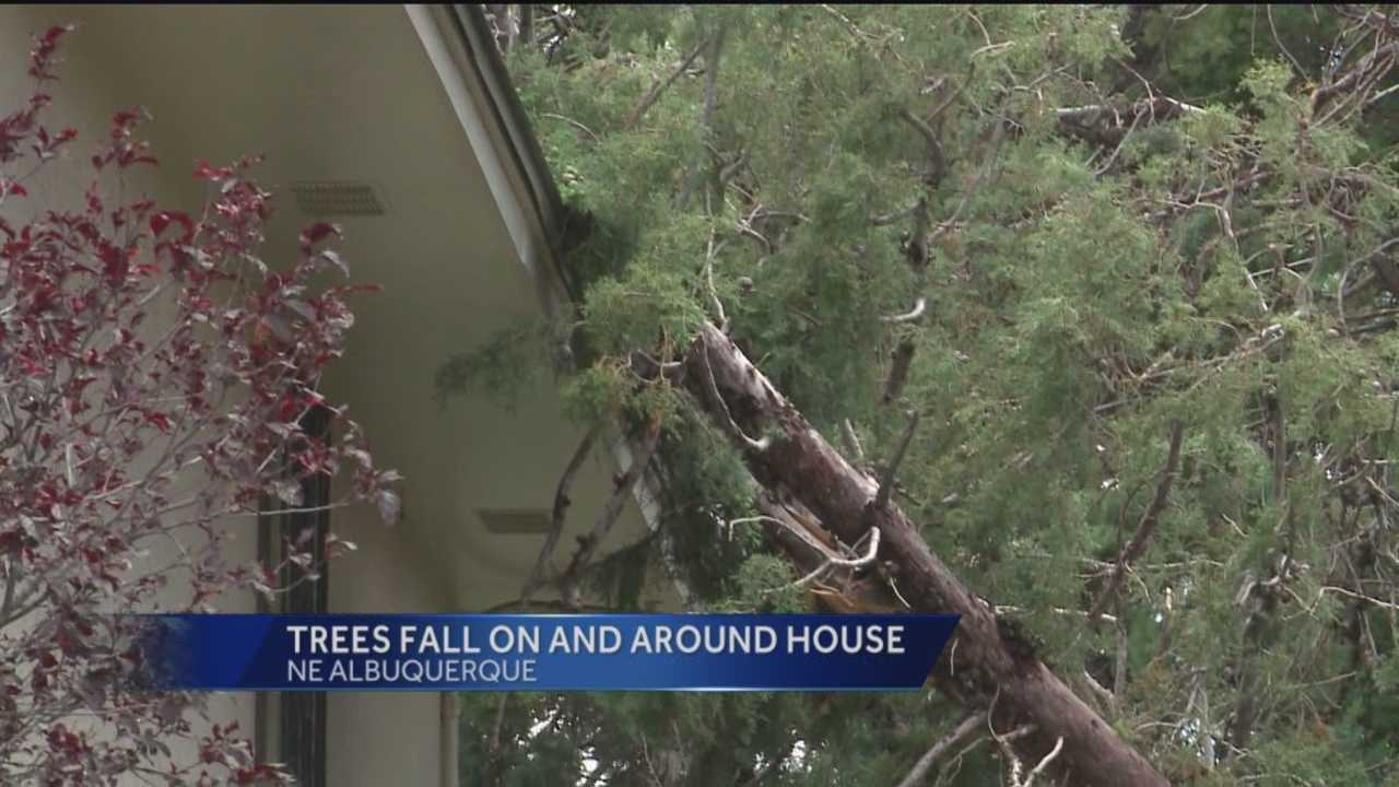 A tree nearly crashed through a family's home in northeast Albuquerque on Sunday.