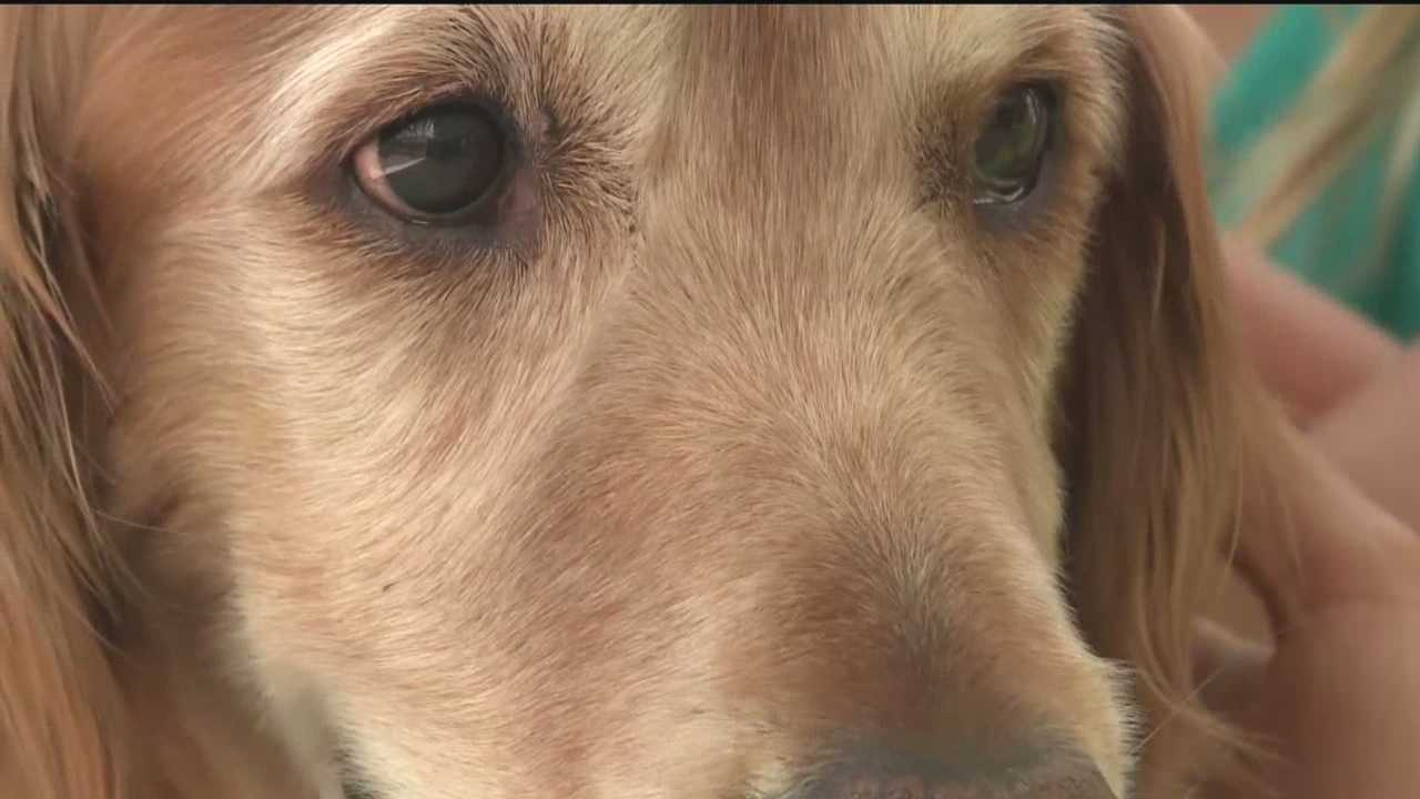 Students at one Rio Rancho school are helping their beloved therapy dog fight a hard battle against cancer.